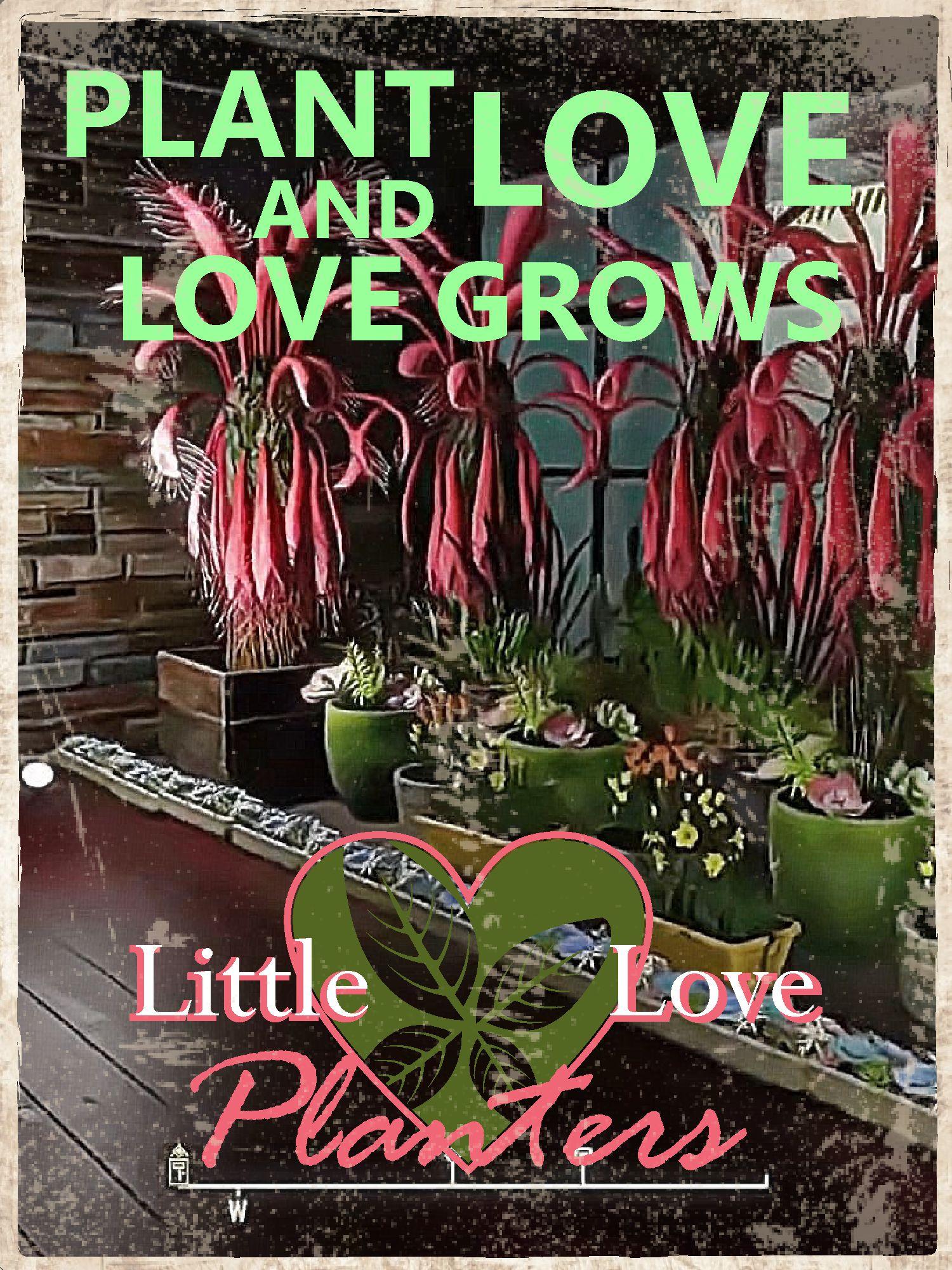 Little Love Planters